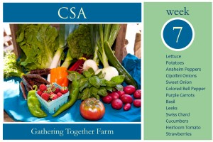 CSA Week 7 Graphic