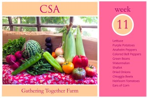 CSA Week 11 Graphic