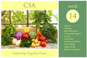 csa-week-14-graphic