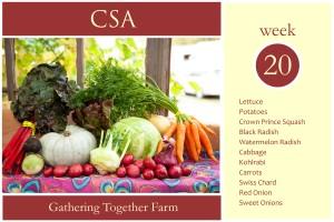 csa-week-20-graphic